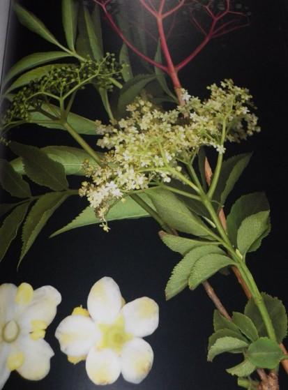 herbier 6