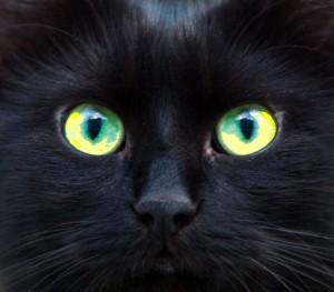 chat-noir-