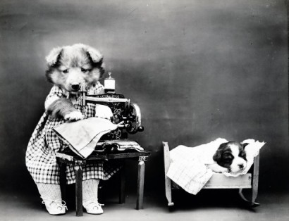 cute-dogs-vintage-photo