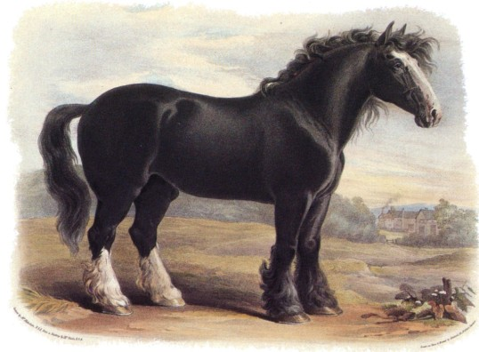 old-english-blackhorse