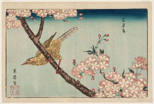 estampe-japonaise-cerisiers-en-fleurs